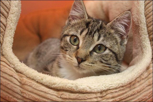 kitteninbed