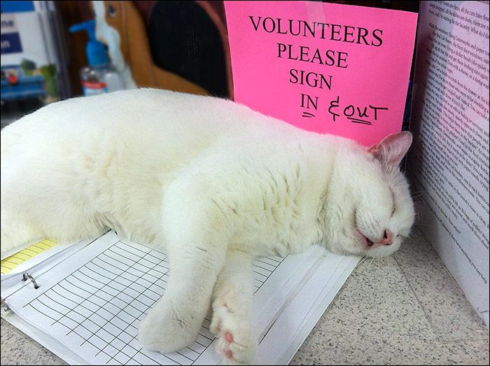 volunteerssleepcat