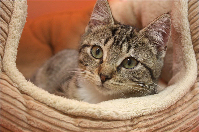 kitten in a soft bed