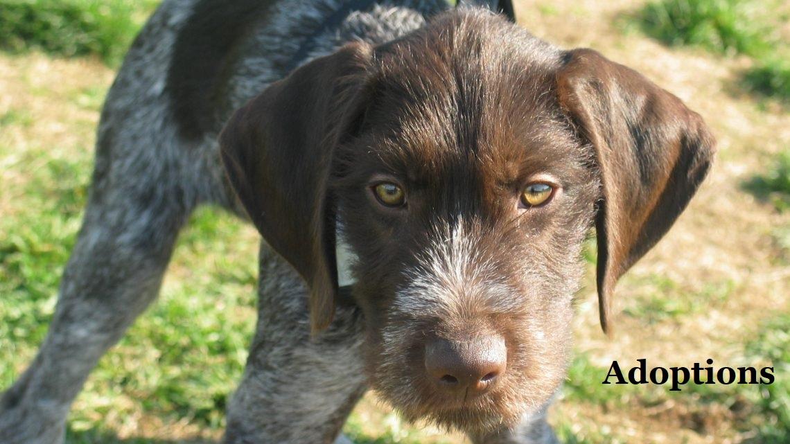 SPCA of Hancock County, Maine – Pet Adoptions, Animal