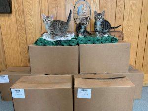 Kittens on CLYNK bags