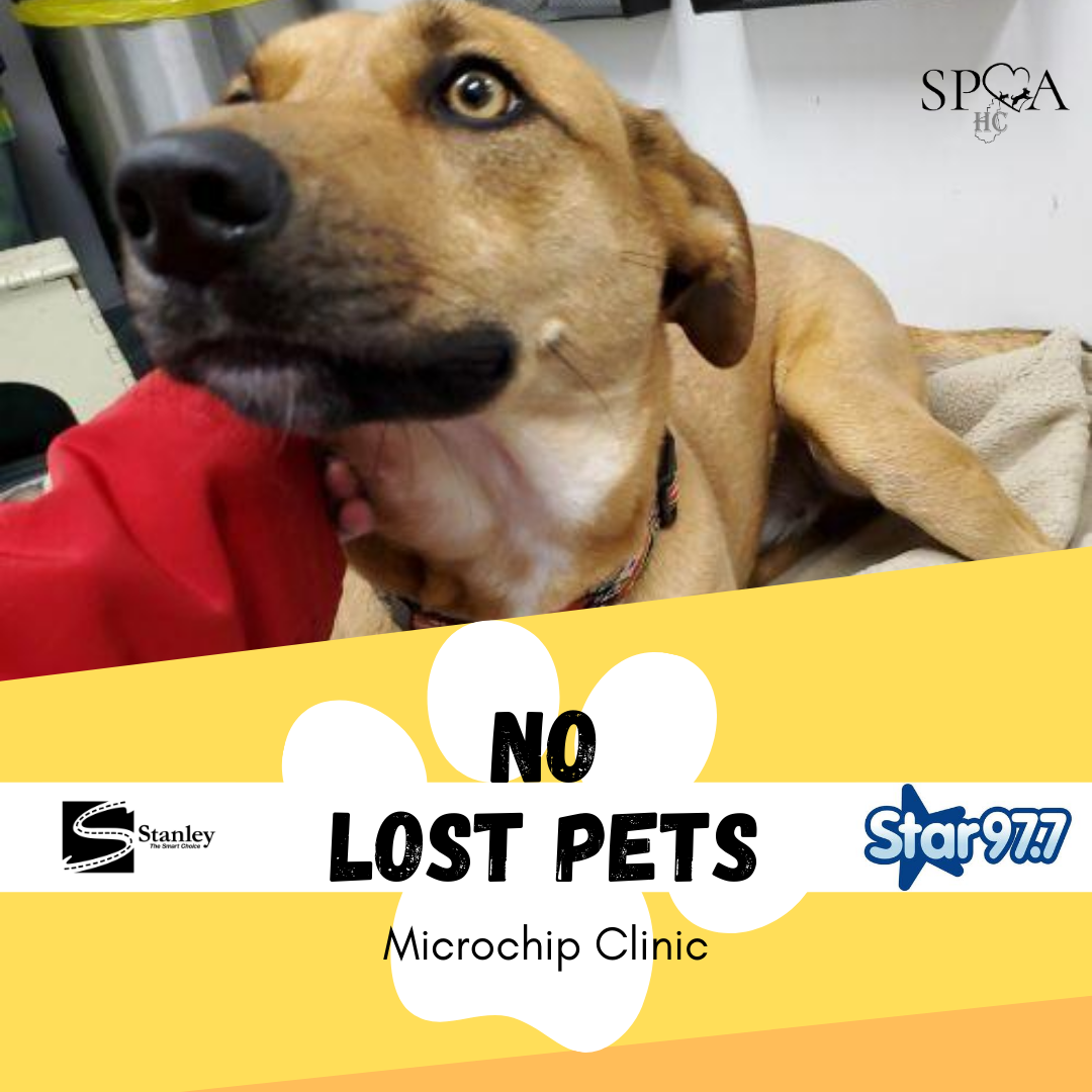Microchipping Clinic at Stanley Subaru