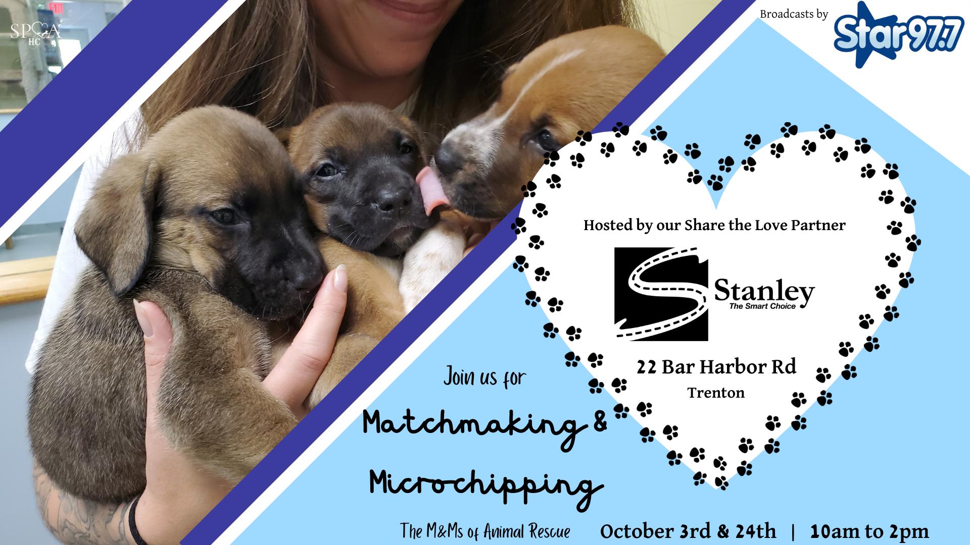 Pet Matchmaking Day at Stanley Subaru