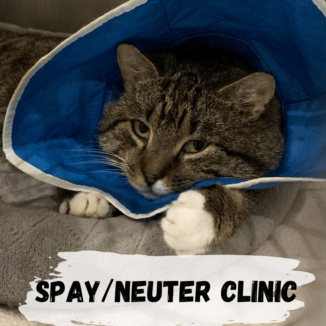 Read more about the article Spay/Neuter Clinic